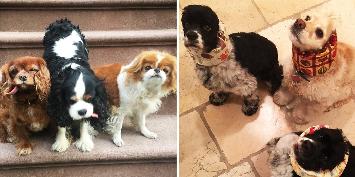 Oprah Diet Side By Side Man Repeller Dogs